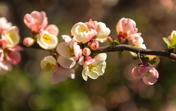 Фото обои ветка, цветочки, цветение, нежно, листики