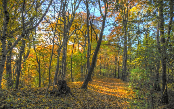 Фото обои осень, лес, листья, деревья, ветки, парк, путь