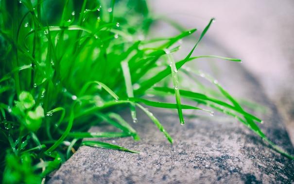 Фото обои трава, зеленая