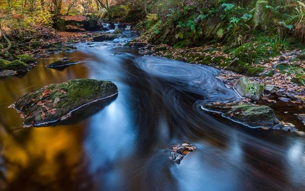 Фото обои осень, листья, природа, красиво