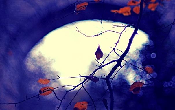 Фото обои осень, листья, природа, фон, цвет