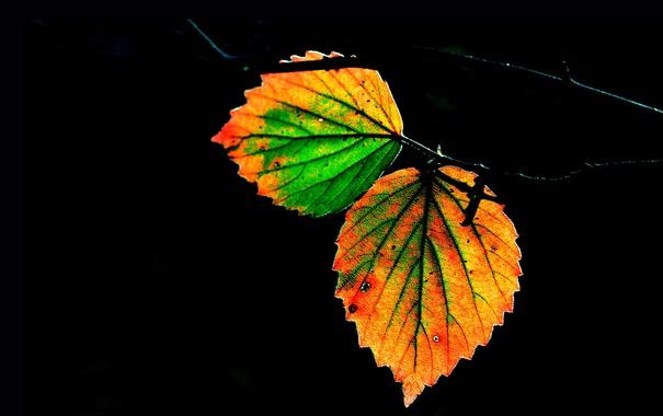Фото обои осень, ночь, лист, ветка