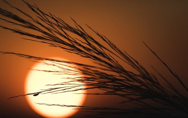 Фото обои солнце, природа, закат, растение
