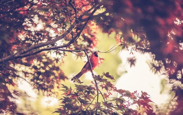Фото обои листья, птица, дерево, ветви