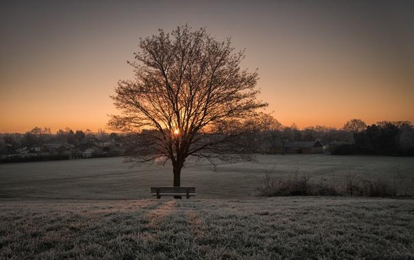 Фото обои скамья, утро, дерево