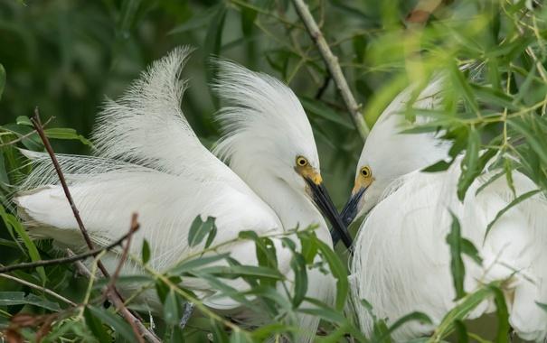 Фото обои природа, птица, перья, клюв