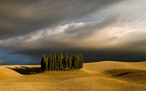 Фото обои пейзаж, деревья, поле