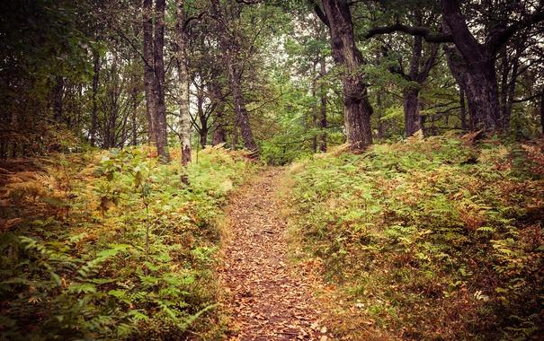 Фото обои осень, лес, листья, деревья, путь