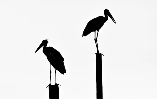 Фото обои птица, клюв, силуэт