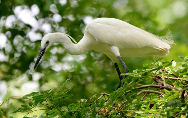 Фото обои лес, природа, дерево, green, птица, белая, white