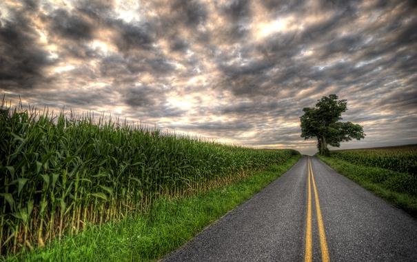 Фото обои дерево, поля, тучи, плантации, пасмурно, дорога, шоссе
