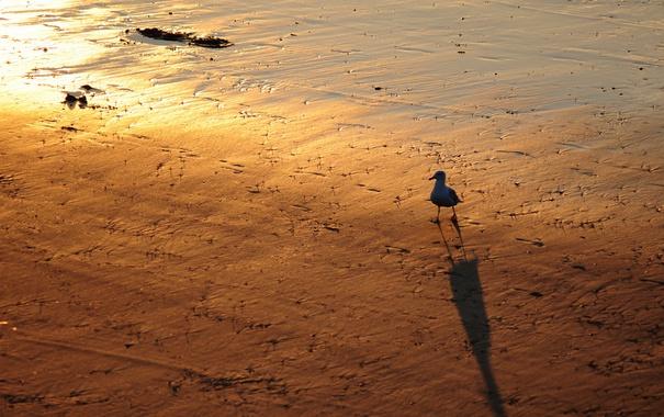 Фото обои свет, птица, тень