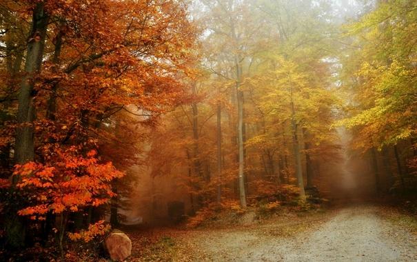 Фото обои осень, лес, туман, дороги