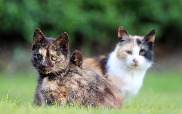 Фото обои трава, кошки, взгляды