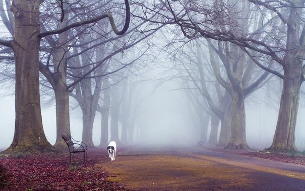 Фото обои осень, деревья, туман, путь, собака, скамейки