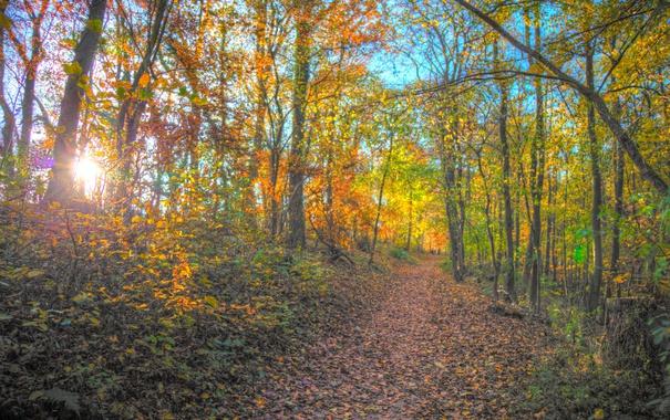 Фото обои осень, лес, листья, солнце, деревья, ветки, путь