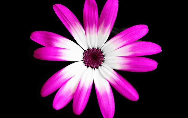 Фото обои цветок, краски, лепестки, фон