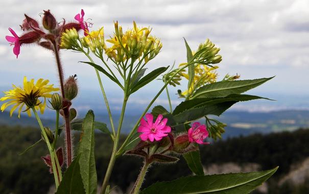 Фото обои небо, листья, облака, макро, цветы, горы, растение
