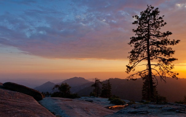 Фото обои sunset, usa, beetle rock, sequoia national park