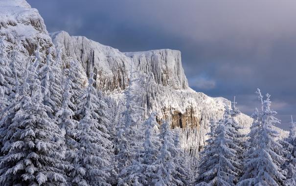 Фото обои зима, гора, леревья