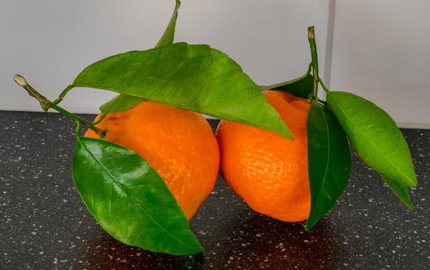 Фото обои листья, цитрус, плод, мандарин