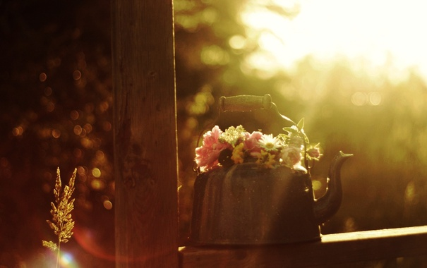 Фото обои макро, цветы, фото, чайник, боке