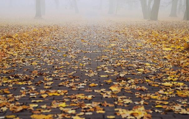 Фото обои парк, путь, туман, деревья, осень, листья