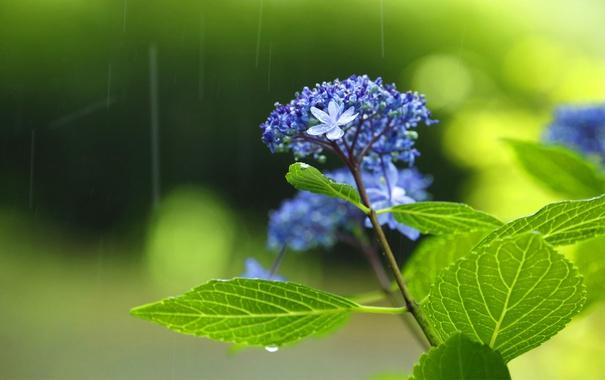 Фото обои листья, цветы, дождь, зеленый чай, райский чай