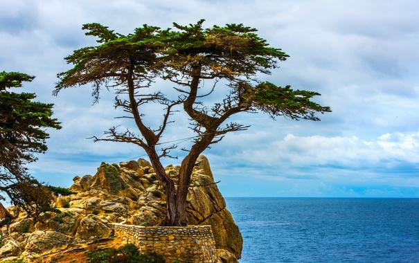 Фото обои море, природа, скала, дерево