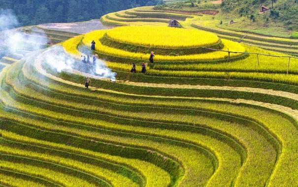 Фото обои зелень, люди, дым, поля, костер, домики, плантации