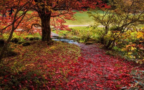 Фото обои природа, деревья, красиво, осень, листья