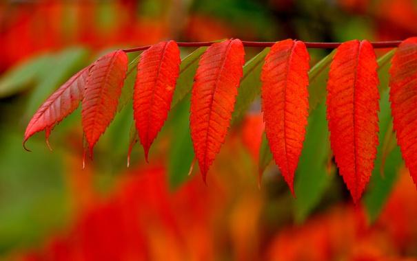 Фото обои осень, листья, краски, ветка, багрянец