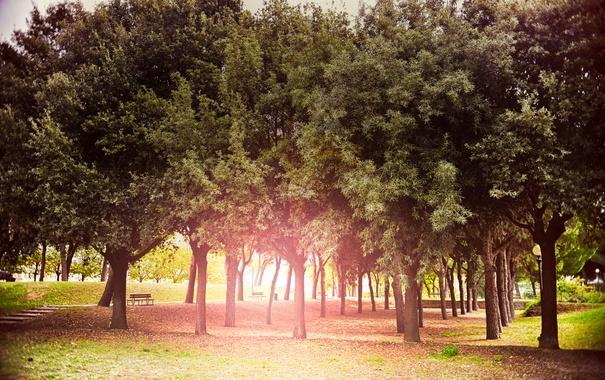 Фото обои осень, солнце, деревья, парк, сияние, Sun, Autumn