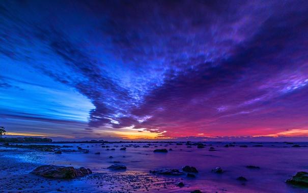 Фото обои море, небо, облака, камни, дерево, вечер, отлив