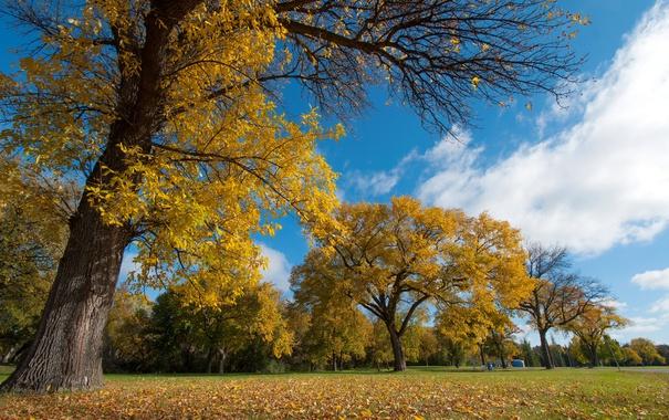 Фото обои листья, деревья, осень, парк, небо