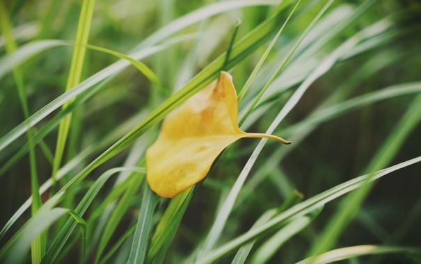 трава и лист обои