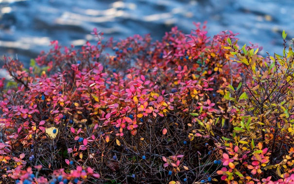 Фото обои осень, листья, река, куст, поток