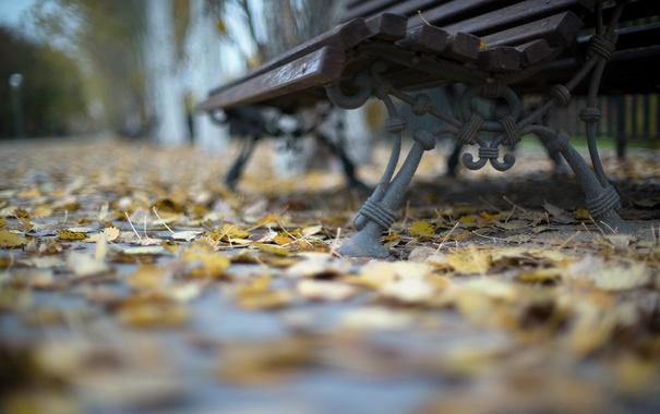 Фото обои улица, скамья, город, листья