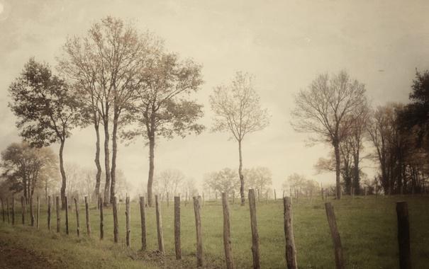 Фото обои поле, забор, туман