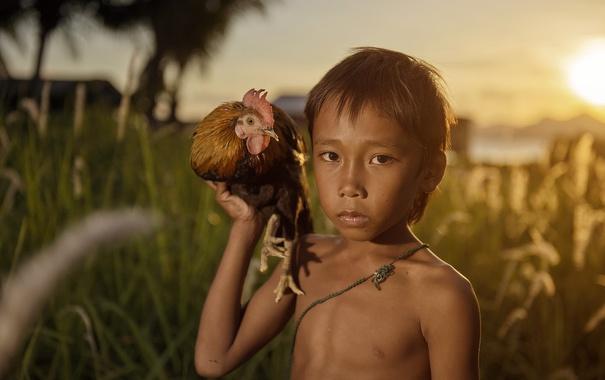 Фото обои закат, курица, мальчик