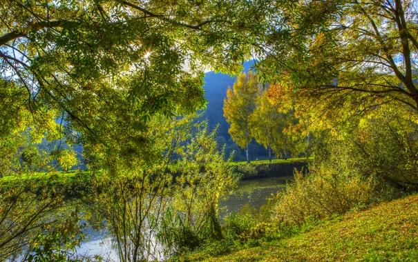 Фото обои Nehren, кусты, речка, Германия, ветки, деревья, солнце