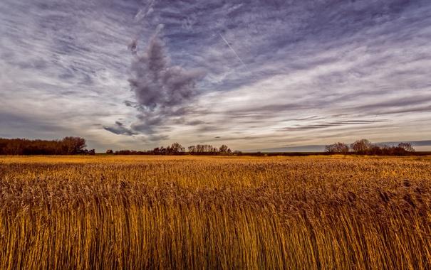 Фото обои природа, поле, небо