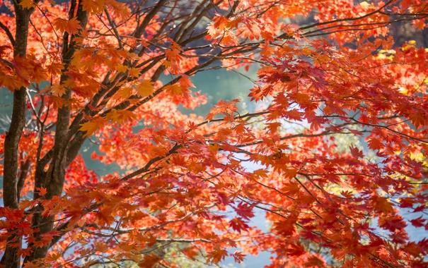 Фото обои осень, листья, вода, ветки, дерево, краски