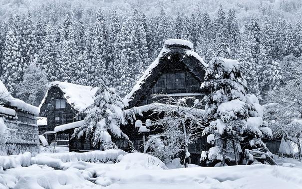 Фото обои зима, снег, дом, Япония, остров Хонсю, Гокаяма, Сиракава-го