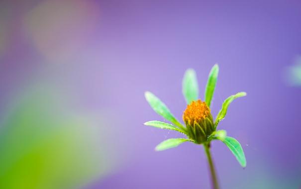 Фото обои растение, цветок, лепестки, природа