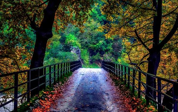 Фото обои деревья, мост, природа, осень. листья