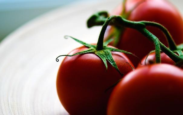 Фото обои макро, еда, тарелка, помидоры