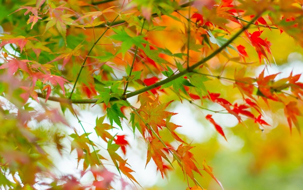 Фото обои листья, осень, природа