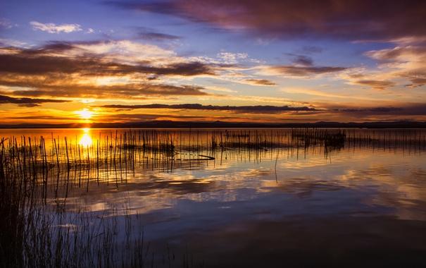 Фото обои отражение, озеро, зеркало, куст, солнце, небо, стебли закат