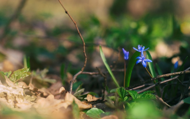 Фото обои цветы, ветки, лепестки, синие